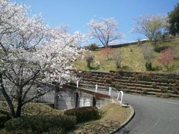 12.4.3高岡桜4