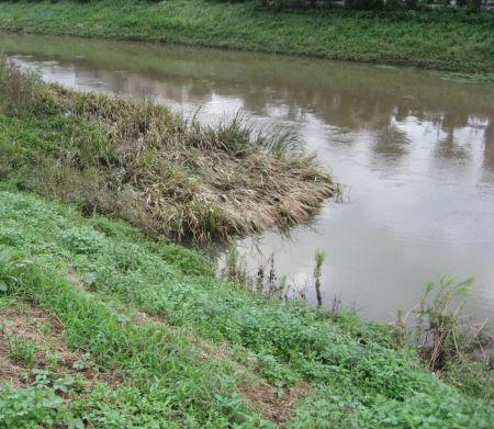 9月28日 増水した河川