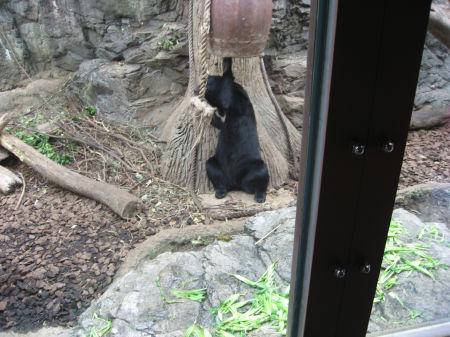 熊 148