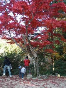 2009.11.28 宮島 039