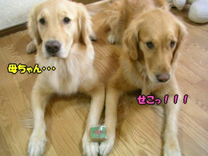 SANY0006_20091215163546.jpg