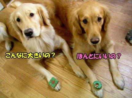 SANY0008_20091215163546.jpg
