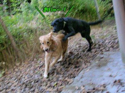 SANY0022_20091201194709.jpg