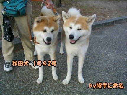 SANY0044_20091201194817.jpg
