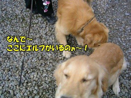 SANY0121_20091213230815.jpg