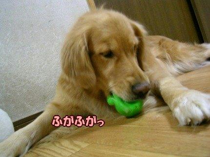 SANY0129_20091203071811.jpg