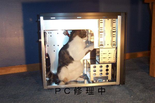 メンテナンス猫
