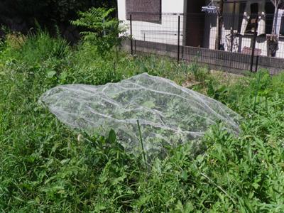 草ぼうぼうの畑