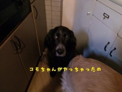 2013-12-01-00-32-02_deco.jpg