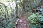 2009・11・08廃線さくら道1