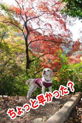2009・11・08廃線紅葉