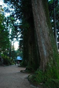 2009・11・14 20番 杉並木