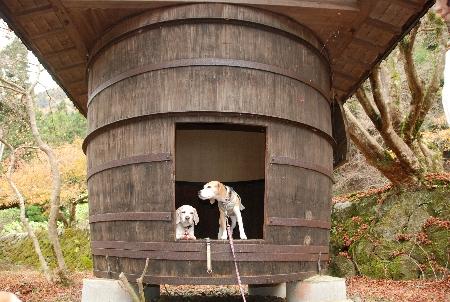 2009・11・22酒樽&のん