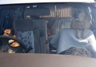 犬の運転手