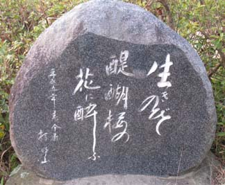 醍醐桜説明3