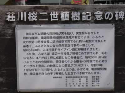 荘川桜説明1