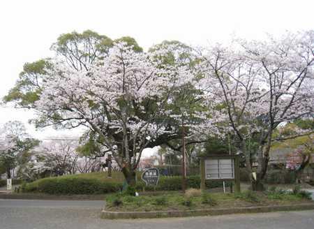 田原坂公園3