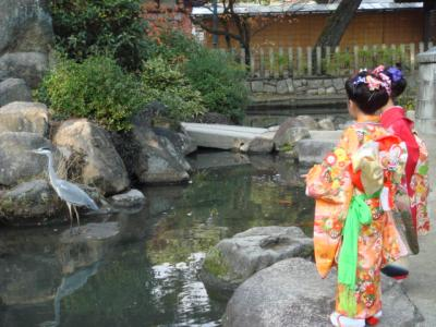 2009.11.23 七五三⑪ 本物の鶴