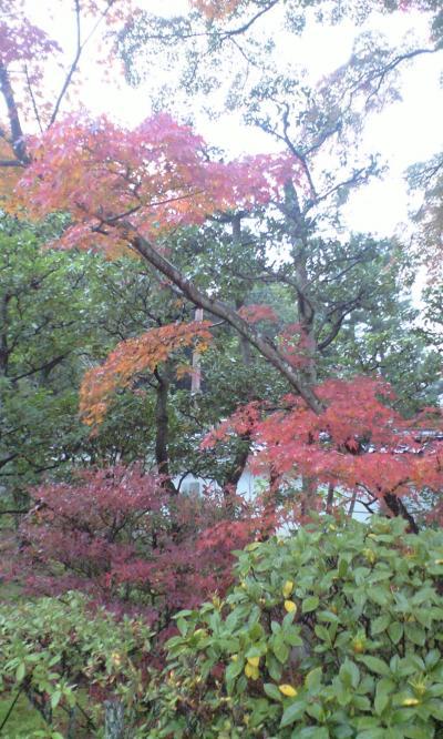 妙心寺autumn1