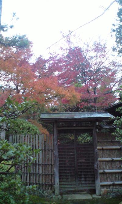 妙心寺autumn2