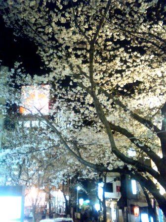 sakusakusakura0402.jpg