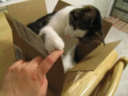 Amazon cat 1