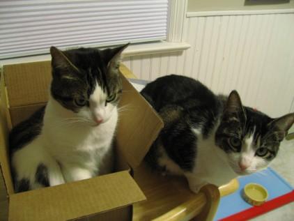 Amazon cat 3