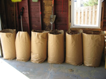 Bags and bags of leaves