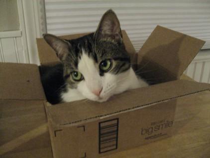Sakura dissing in the box