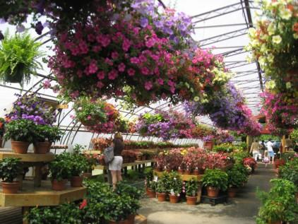 Abmas flowers