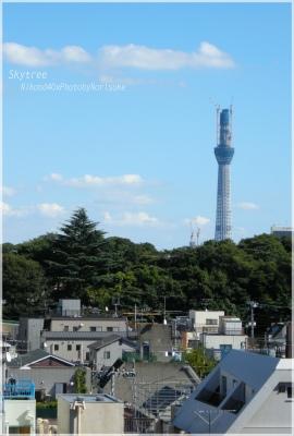nippori2.jpg