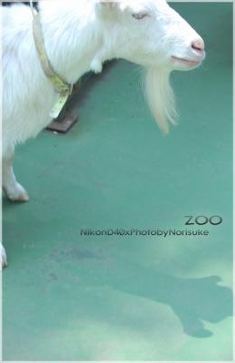 zoo652.jpg