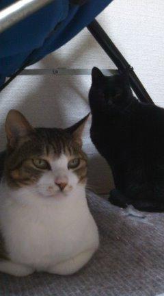 クーロン♀&ムー♂