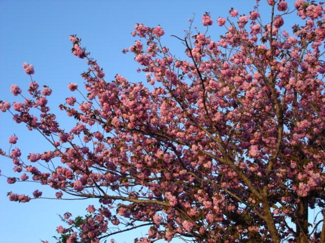 小学校に咲く花