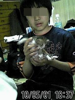 佐賀県Nさま保護仔猫
