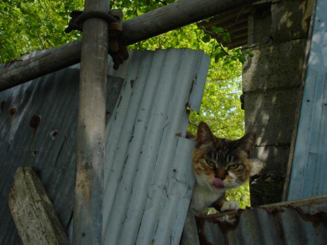 我孫子市民ボランティアグループTさん管理の猫たち
