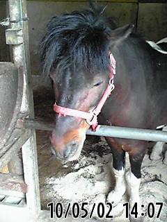 乗馬クラブ「バルバロ」のお馬さん