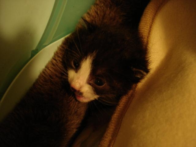 2010/5/2保護仔猫