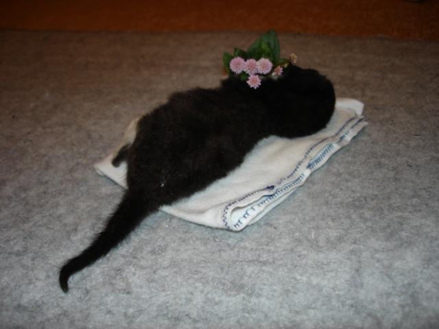 流山遺棄猫 カッチ