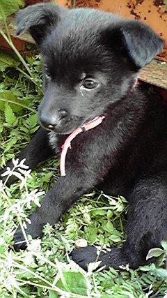 我孫子市Oさま 保護犬