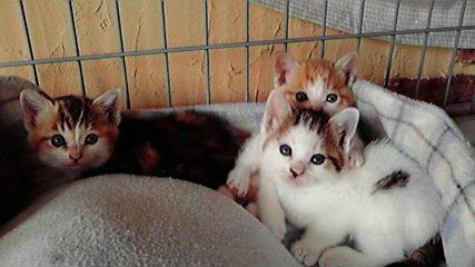3匹の仔猫
