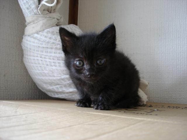 流山遺棄猫 モグタン