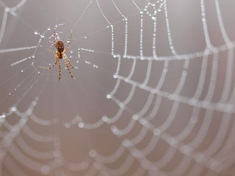 クモの一種