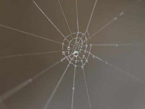 クモの巣2