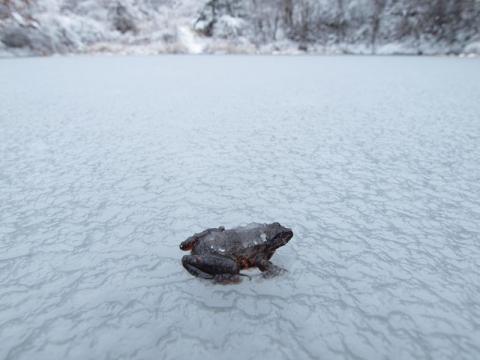 氷上ヤマアカ2
