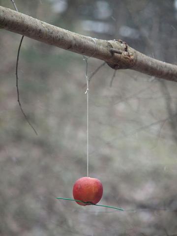 宙とぶリンゴ