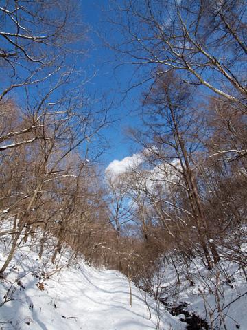 雪の野鳥の森