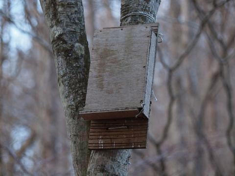 コウモリ巣箱