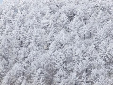 雪の森遠景