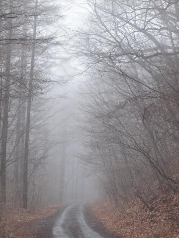 霧の小瀬林道
